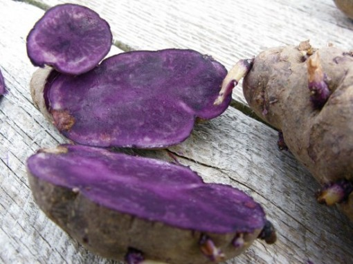 Peruvian Purple Potatoes