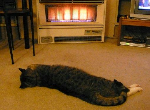 Rex&Heater