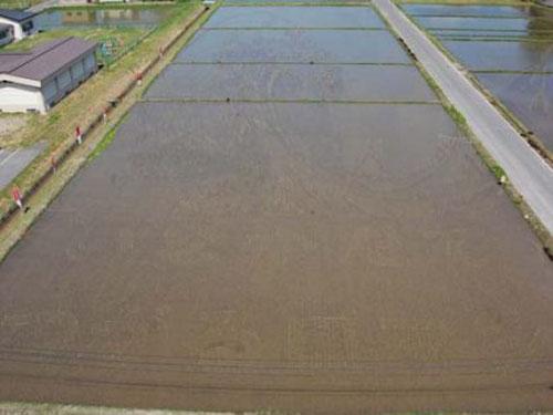 ricefieldart02