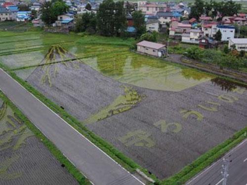 ricefieldart05