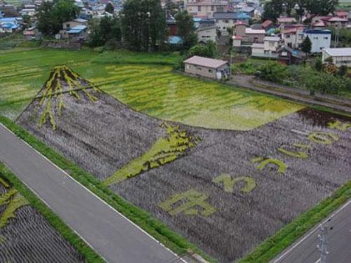 ricefieldart07