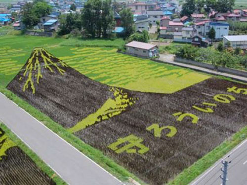 ricefieldart08