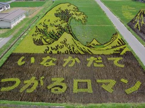 ricefieldart13