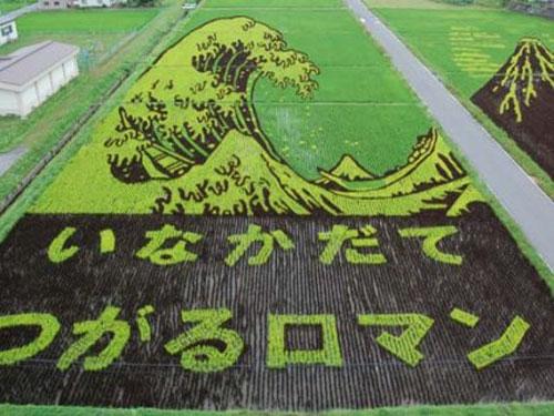 ricefieldart14